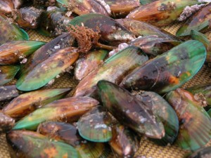 Green Lippled Mussels - a treatment for arthritis?
