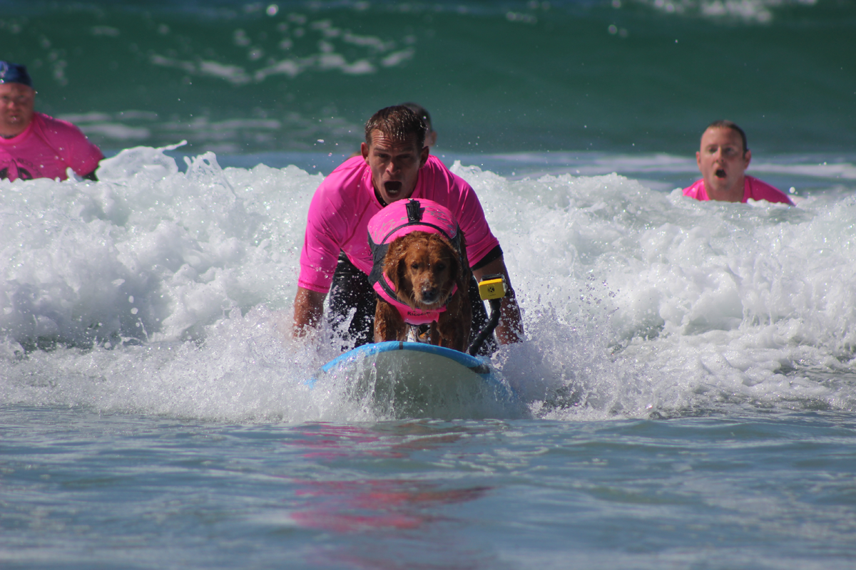 Surf dog & boy with autism help disabled kids catch waves of empowerment