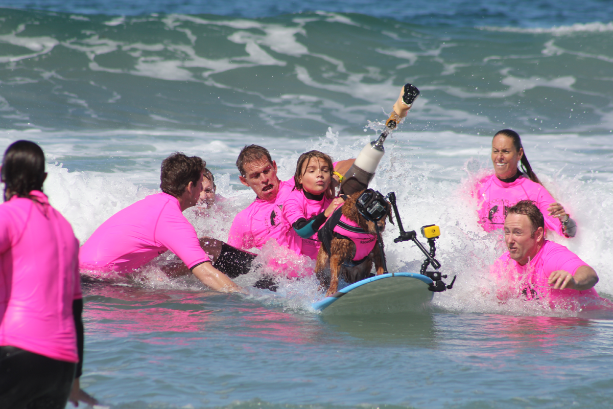 Surf dog & boy with autism help disabled kids catch waves of empowerment!