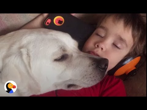 Autism and Dogs